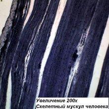 Фото - микроскоп Optika (Italy) Микроскоп Optika M-100FLed 40x-400x Mono